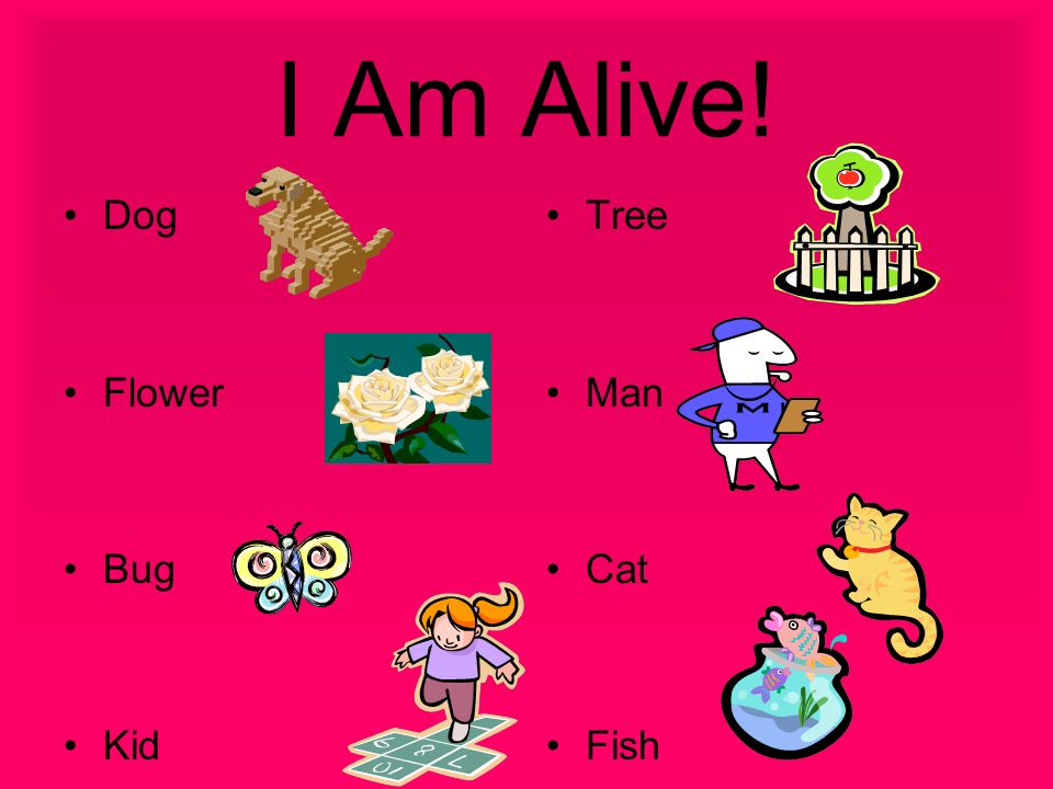 5 Characteristics of Living Things All living things need air, water, and food.