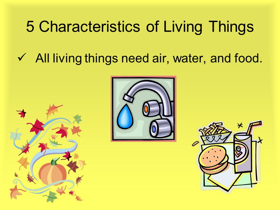 5 Characteristics of Living Things All living things respond to changes.