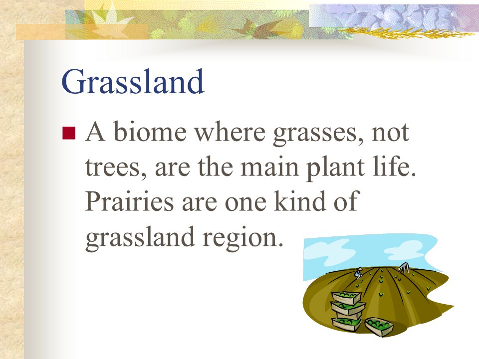 Grassland A biome where grasses, not trees, are the main plant life. Prairies are one kind of grassland region.