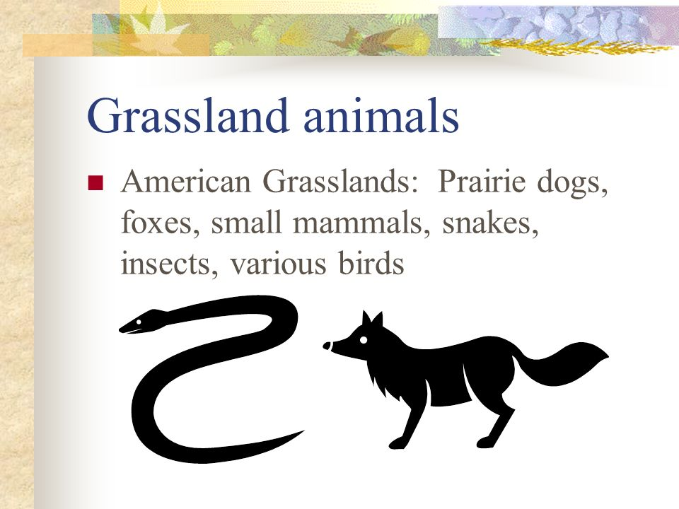 Grassland animals American Grasslands: Prairie dogs, foxes, small mammals, snakes, insects, various birds