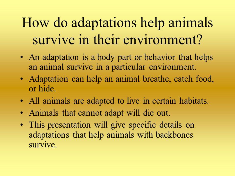 Animal Adaptations Denise Wolfsberger 4 th grade