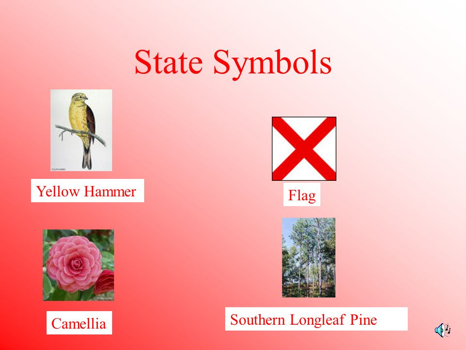 State Facts Capital: Montgomery Statehood: December 14, 1819 22 nd state Highest Point: Mount Cheaha 2407 feet Governor: Bob Riley State Song : Alabama by Julia Tutwiler Tennessee Florida Mississippi Georgia