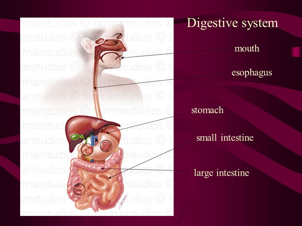 pH in the Digestive System Mouth-pH around 7. Saliva contains amylase, an enzyme which begins to break carbohydrates into sugars. Stomach- pH around 2