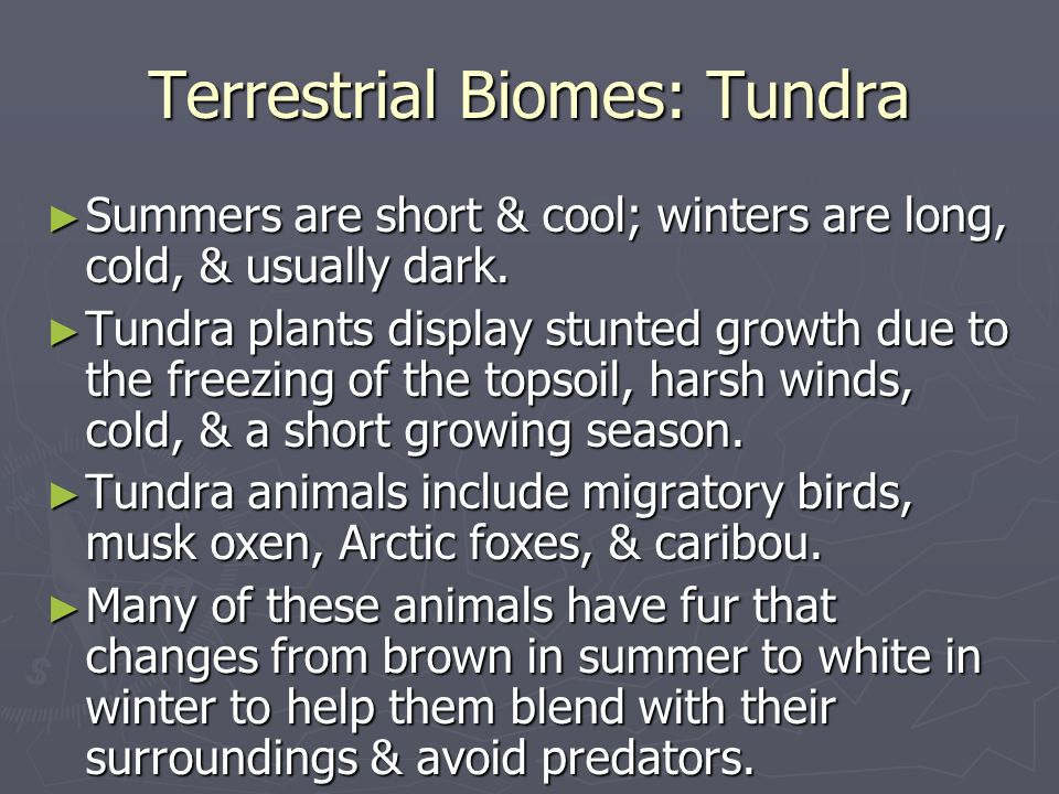 Terrestrial Biomes: Tundra Summers are short & cool; winters are long, cold, & usually dark. Summers are short & cool; winters are long, cold, & usual