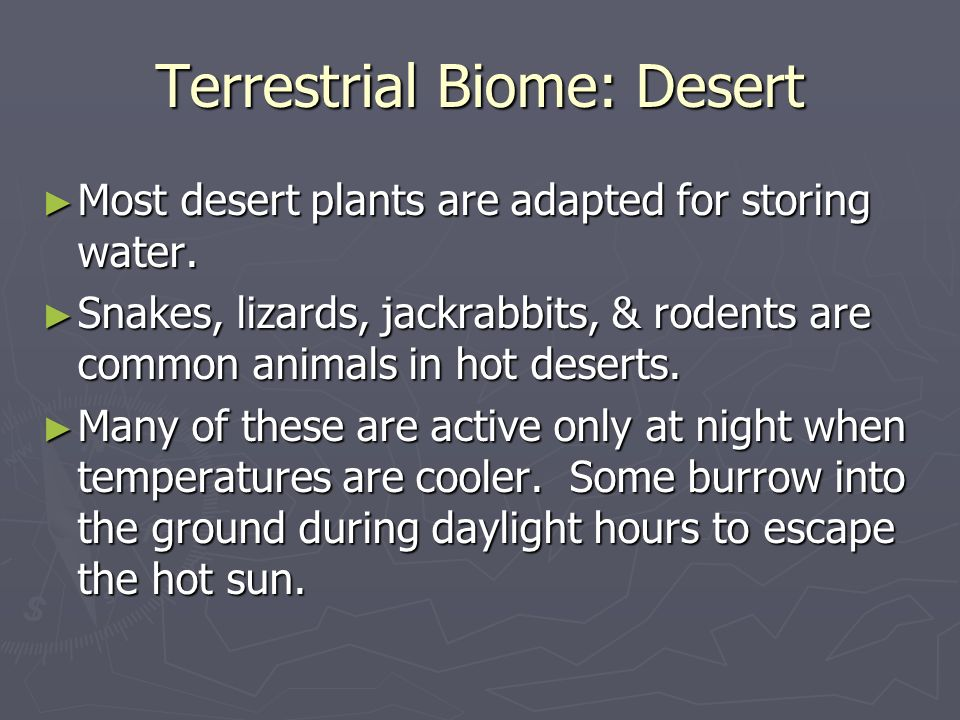 Terrestrial Biome: Desert Most desert plants are adapted for storing water.