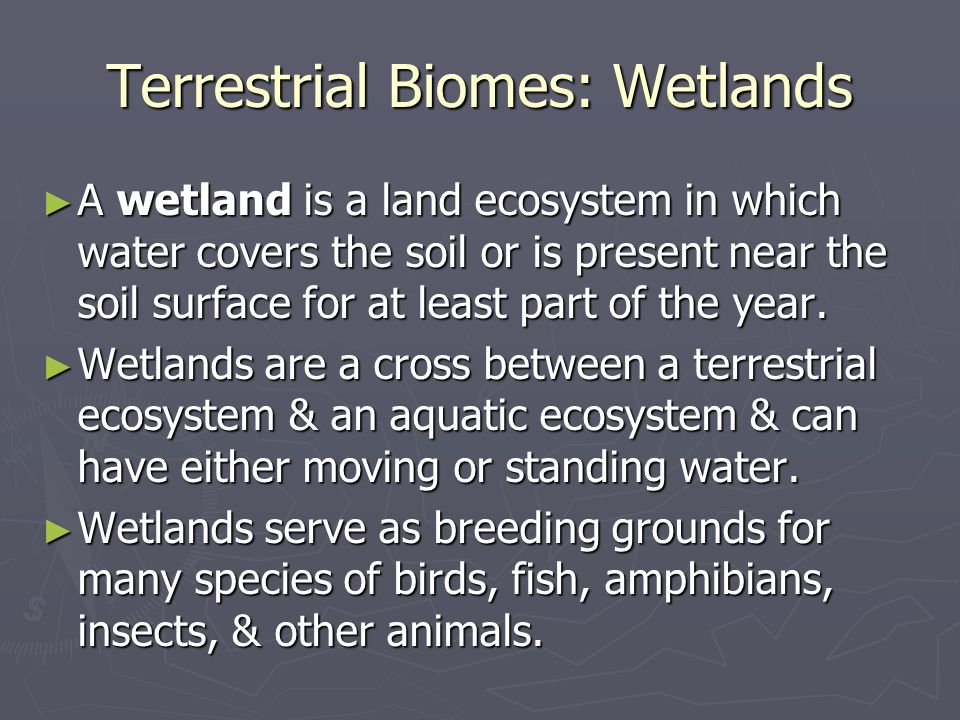 Terrestrial Biomes: Wetlands A wetland is a land ecosystem in which water covers the soil or is present near the soil surface for at least part of the