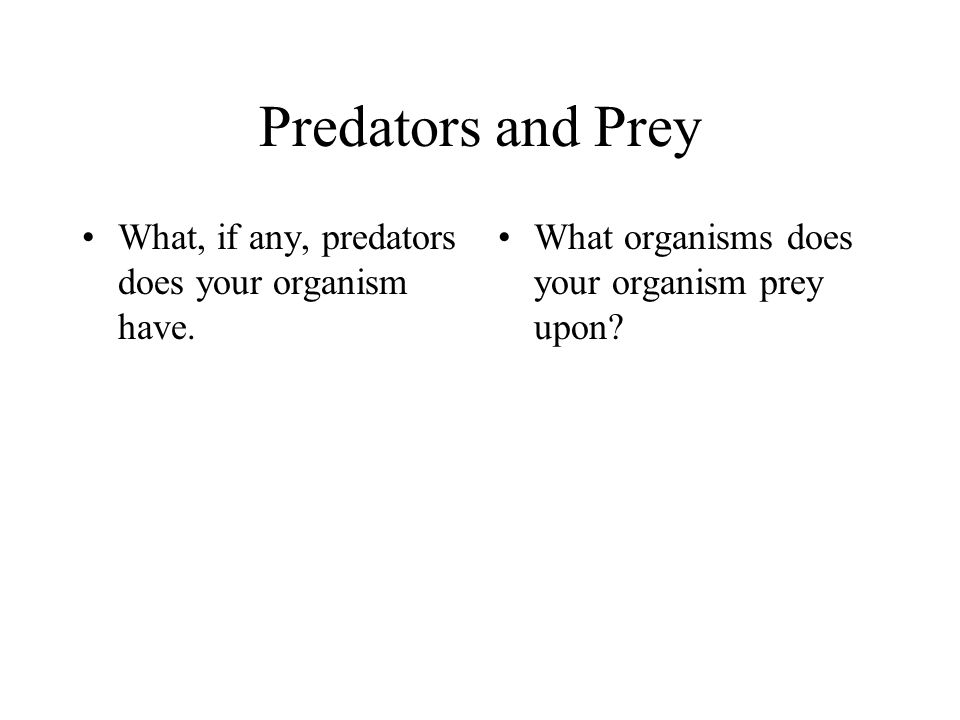 Predators and Prey What, if any, predators does your organism have. What organisms does your organism prey upon?