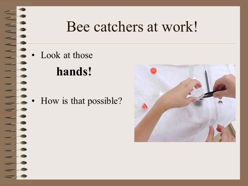 Bee catchers at work! Look at those hands! How is that possible?