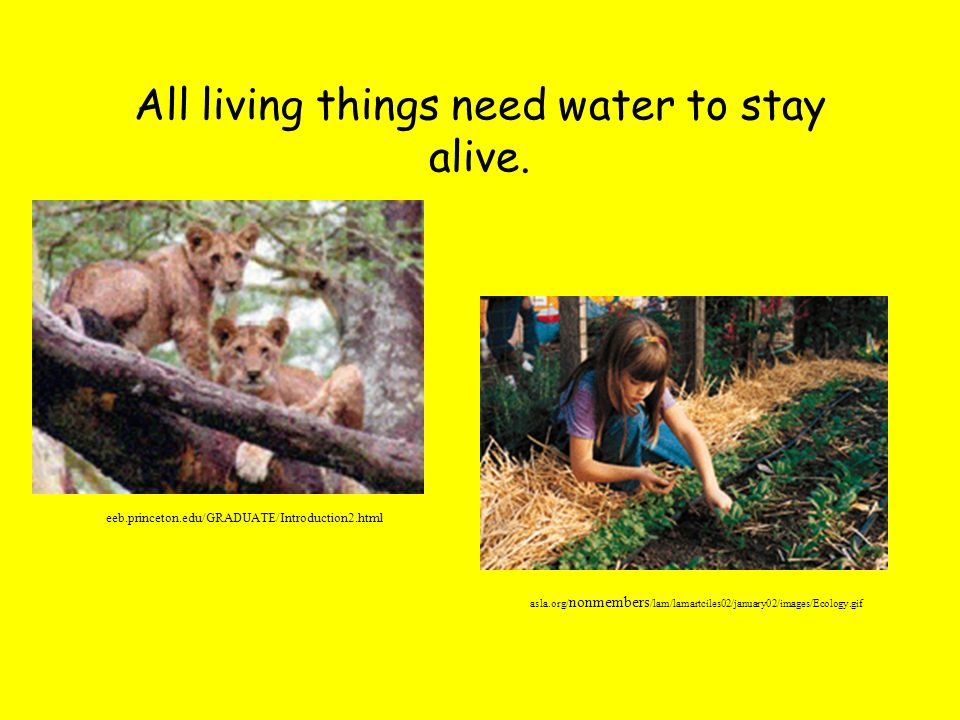All living things need water to stay alive.