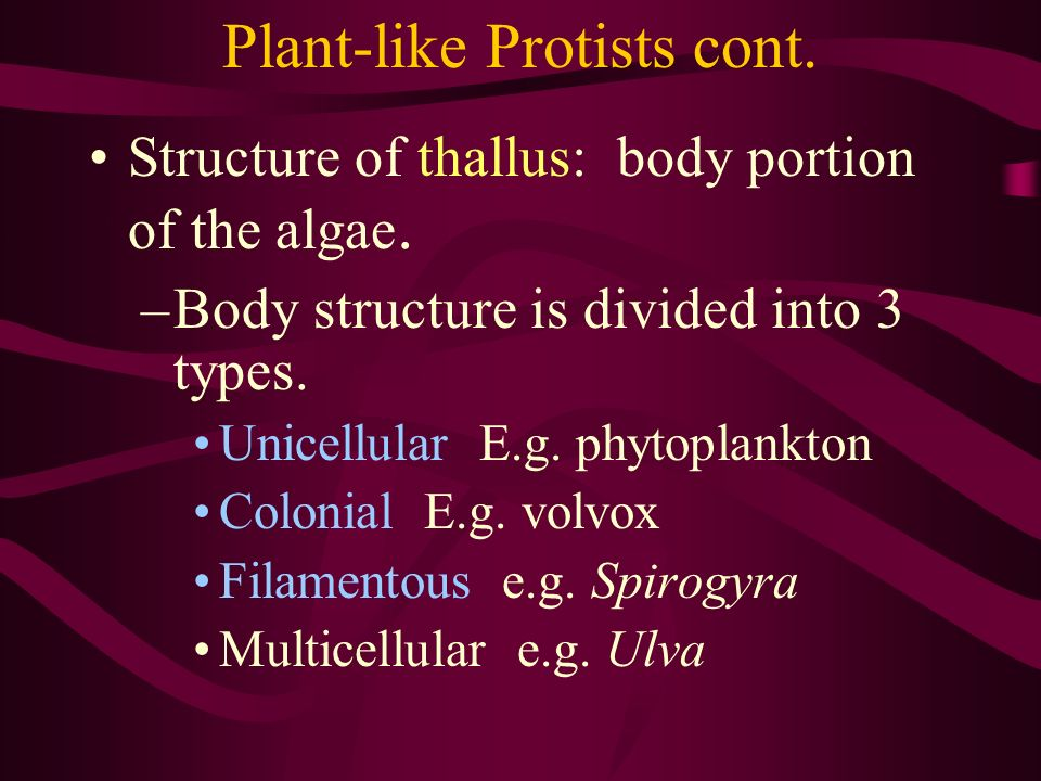 Plant-like Protists cont. Structure of thallus: body portion of the algae. –Body structure is divided into 3 types. Unicellular E.g. phytoplankton Col