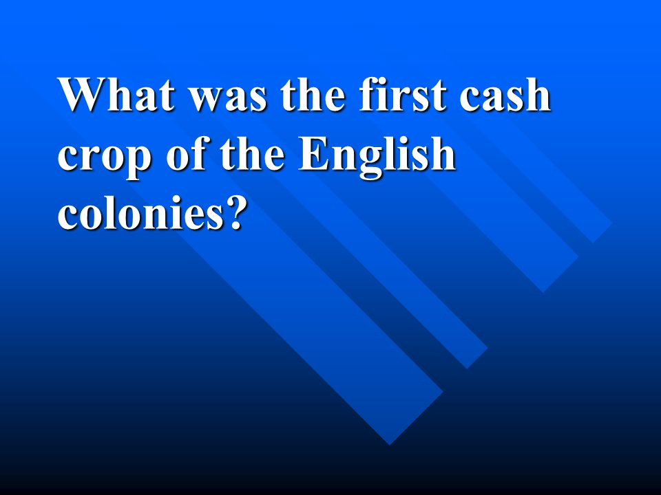 What was the first cash crop of the English colonies?