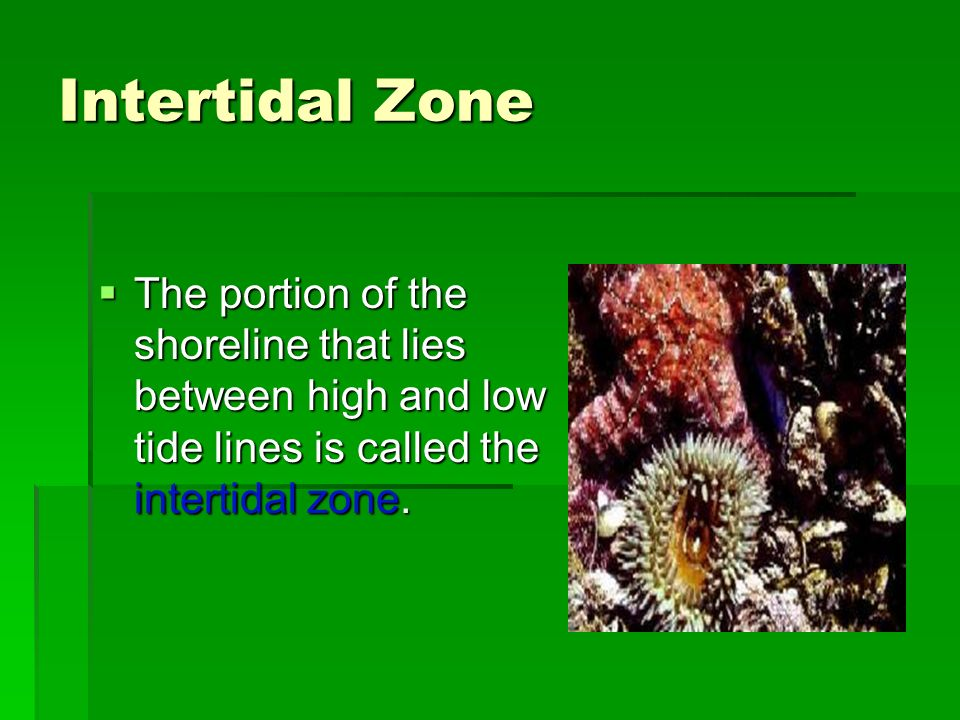 Intertidal Zone The portion of the shoreline that lies between high and low tide lines is called the intertidal zone. The portion of the shoreline tha