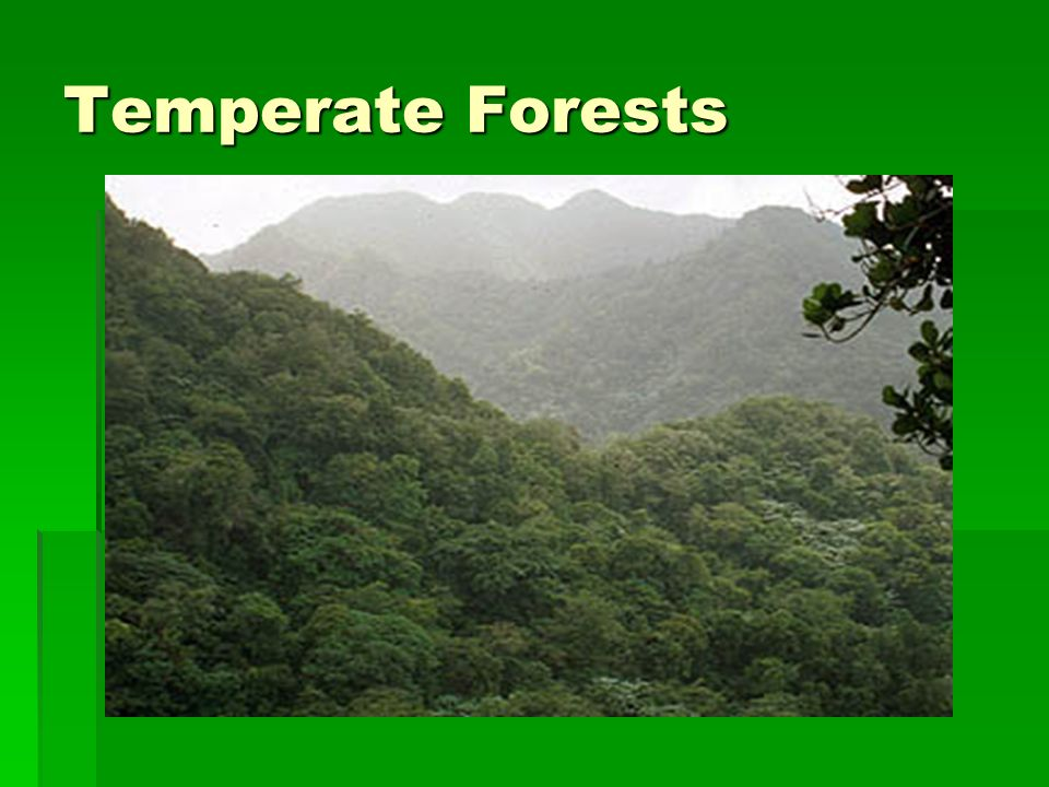 Temperate Forests