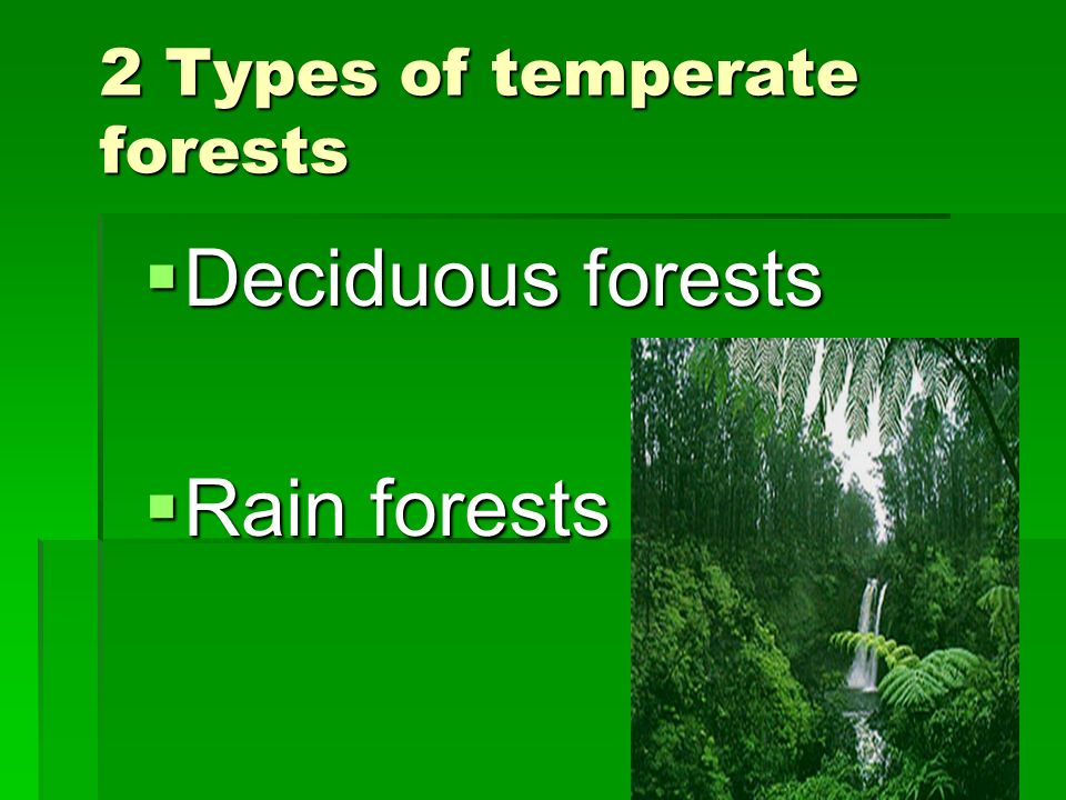 2 Types of temperate forests Deciduous forests Deciduous forests Rain forests Rain forests
