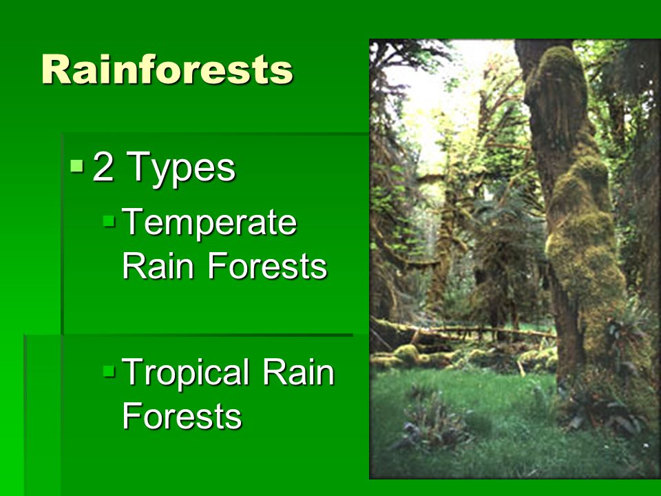 Rainforests 2 Types 2 Types Temperate Rain Forests Temperate Rain Forests Tropical Rain Forests Tropical Rain Forests