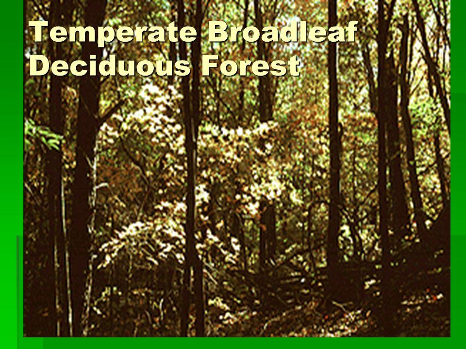 Temperate Broadleaf Deciduous Forest