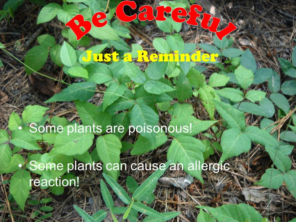 How to Control Invasive Plants First avoid buying and planting exotic nonnative plants Herbicides (Be careful and follow instructions) Hand Pulling- b