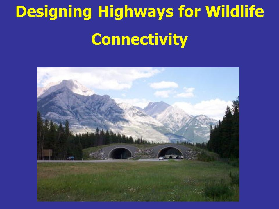Designing Highways for Wildlife Connectivity