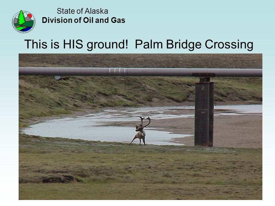 State of Alaska Division of Oil and Gas 16 This is HIS ground! Palm Bridge Crossing