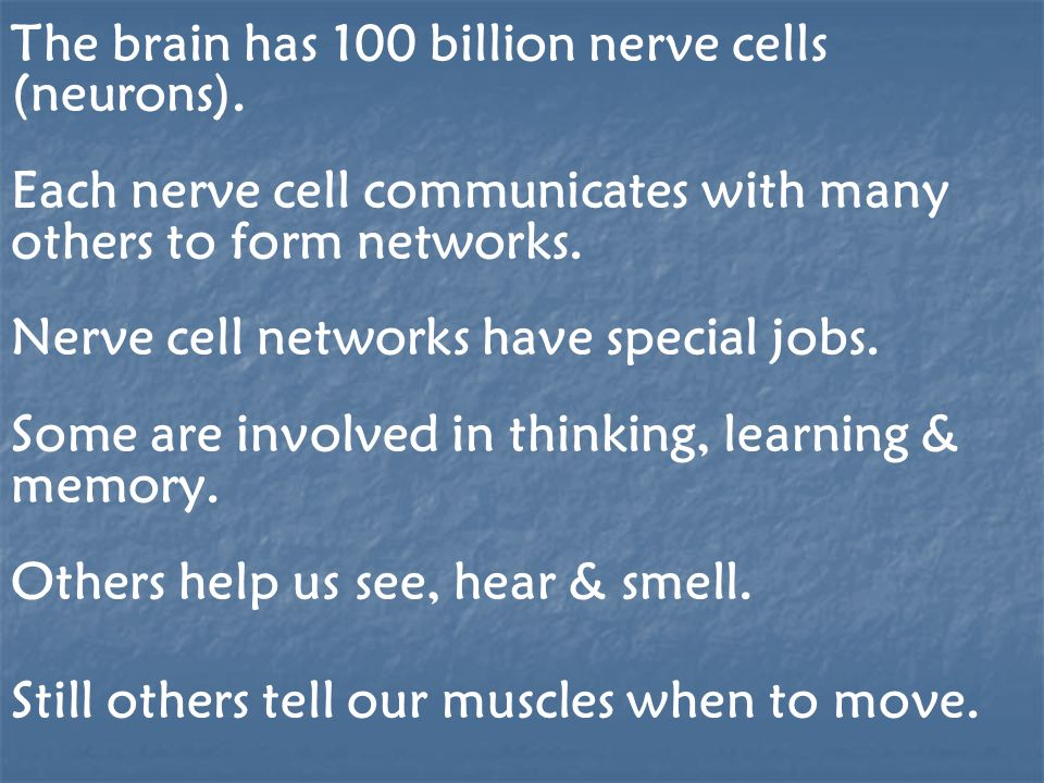 Brain cells operate like tiny factories.