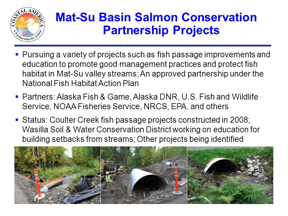 Mat-Su Basin Salmon Conservation Partnership Projects Pursuing a variety of projects such as fish passage improvements and education to promote good m