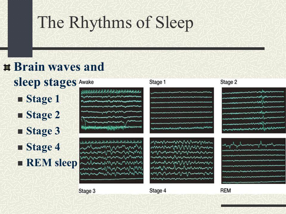The Rhythms of Sleep Brain waves and sleep stages Stage 1 Stage 2 Stage 3 Stage 4 REM sleep