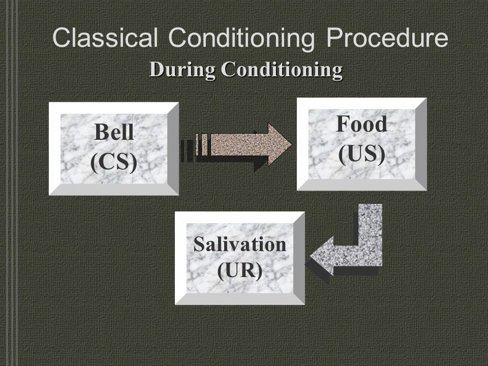 Classical Conditioning Procedure During Conditioning Bell (CS) Food (US) Salivation (UR)