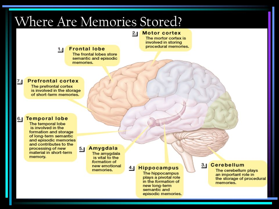 Where Are Memories Stored?