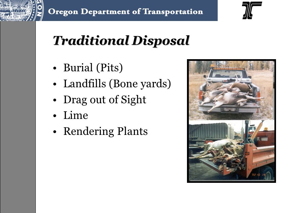 Traditional Disposal Burial (Pits) Landfills (Bone yards) Drag out of Sight Lime Rendering Plants