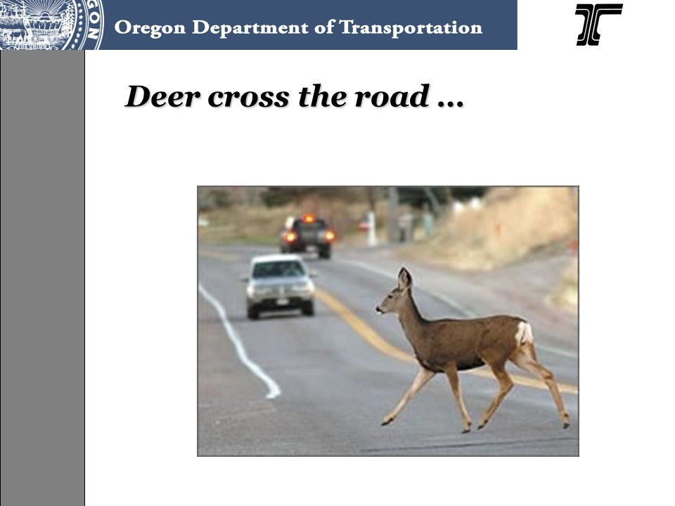 Deer cross the road …