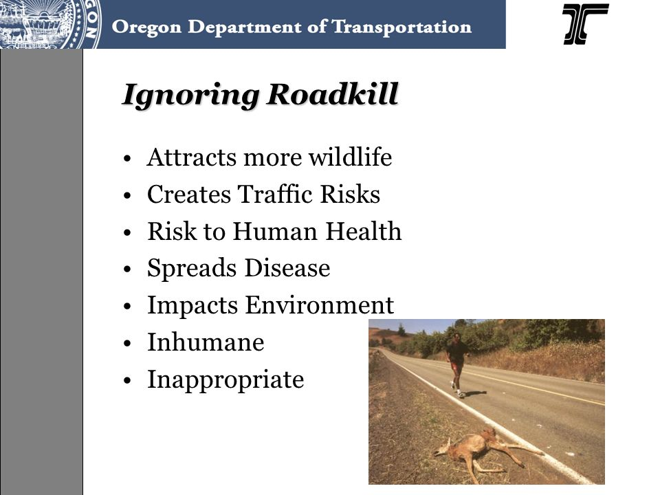 Ignoring Roadkill Attracts more wildlife Creates Traffic Risks Risk to Human Health Spreads Disease Impacts Environment Inhumane Inappropriate