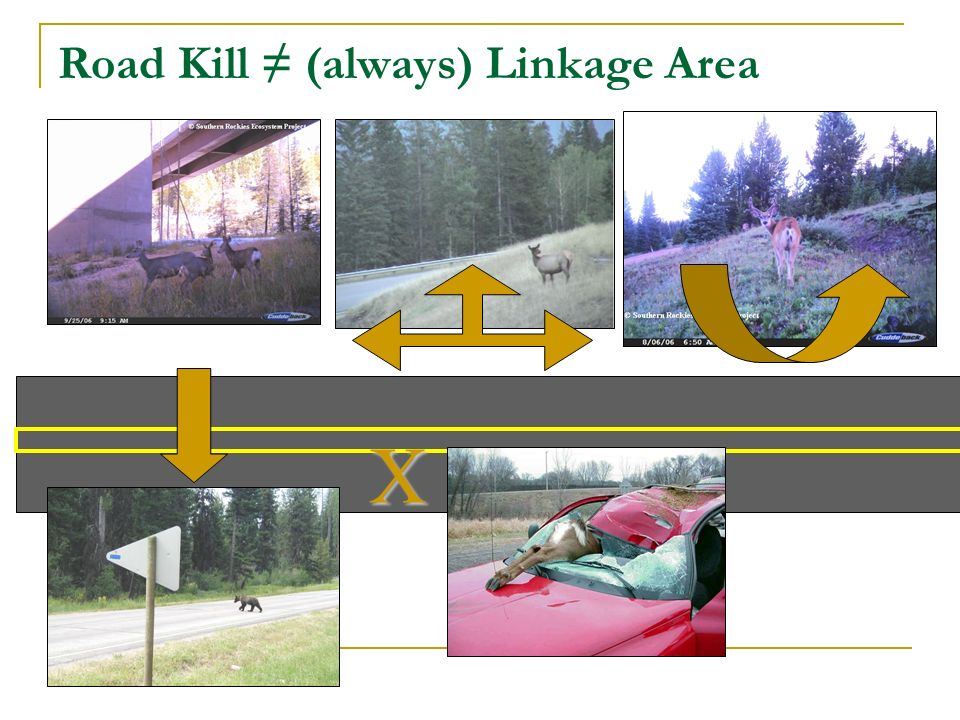 Road Kill (always) Linkage Area X
