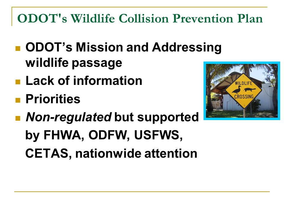 ODOT s Wildlife Collision Prevention Plan ODOTs Mission and Addressing wildlife passage Lack of information Priorities Non-regulated but supported by FHWA, ODFW, USFWS, CETAS, nationwide attention