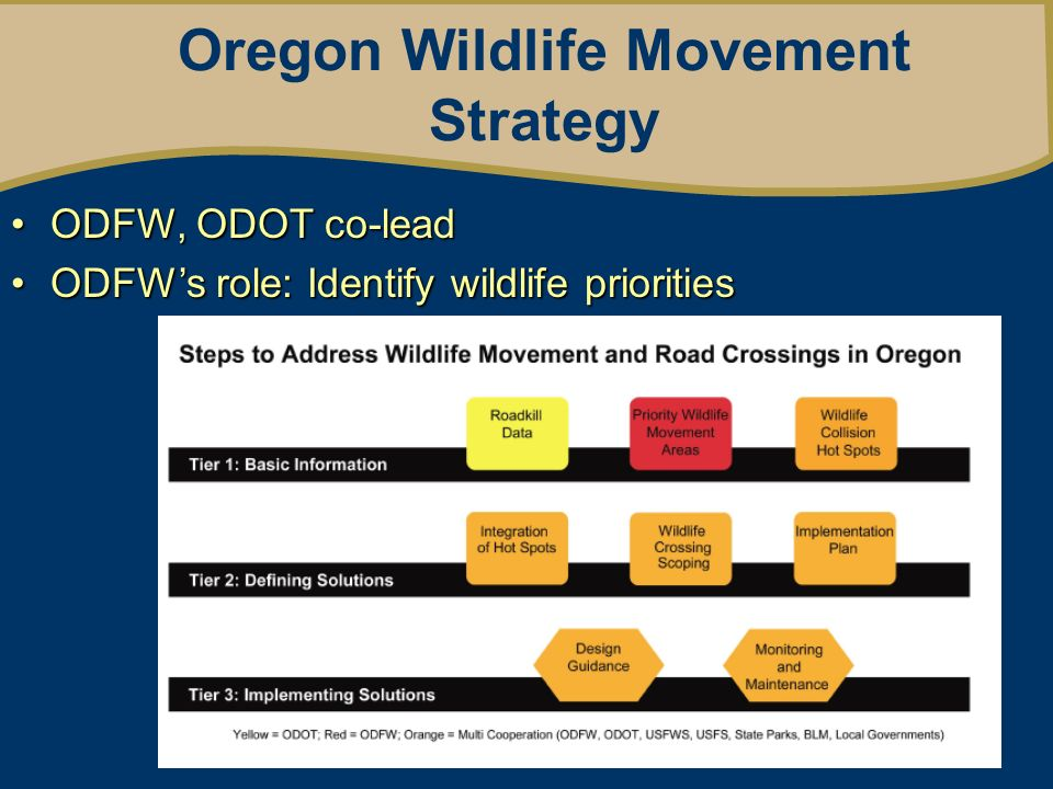 Oregon Wildlife Movement Strategy ODFW, ODOT co-leadODFW, ODOT co-lead ODFWs role: Identify wildlife prioritiesODFWs role: Identify wildlife priorities