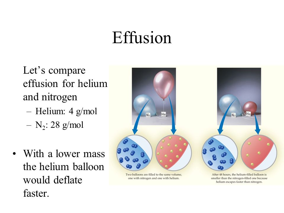 Effusion Lets compare effusion for helium and nitrogen –Helium: 4 g/mol –N 2 : 28 g/mol With a lower mass the helium balloon would deflate faster.