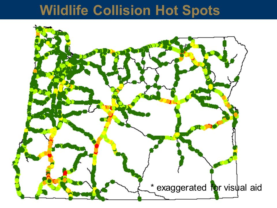 * exaggerated for visual aid Wildlife Collision Hot Spots