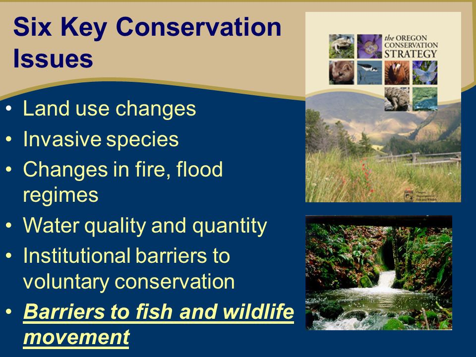 Oregon Wildlife Movement Strategy Provide a framework for cooperation Promote wildlife movement and habitat permeability Reduce the social, economic and environmental impacts of transportation and wildlife conflicts