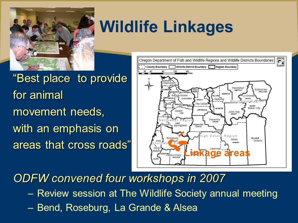 Oregon Wildlife Movement Strategy Wildlife Linkages Best place to provide for animal movement needs, with an emphasis on areas that cross roads ODFW convened four workshops in 2007 –Review session at The Wildlife Society annual meeting –Bend, Roseburg, La Grande & Alsea Linkage areas