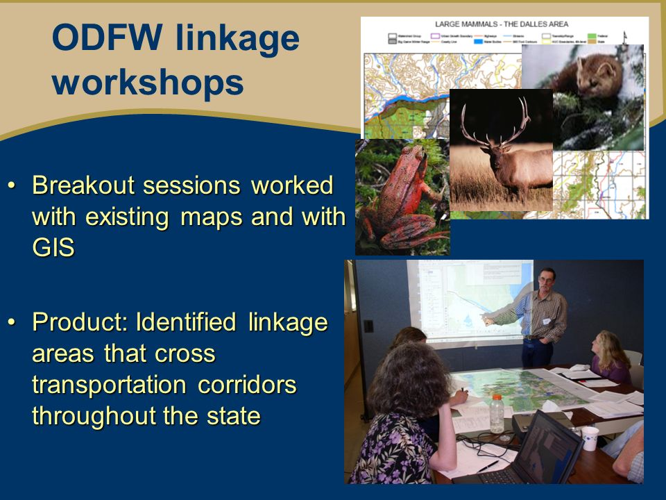Integrate and set priorities By WMS working group Workshop data: –High value for focal species –High Threat value Land Ownership In a Conservation Opportunity Area In an ODOT Roadkill hotspot