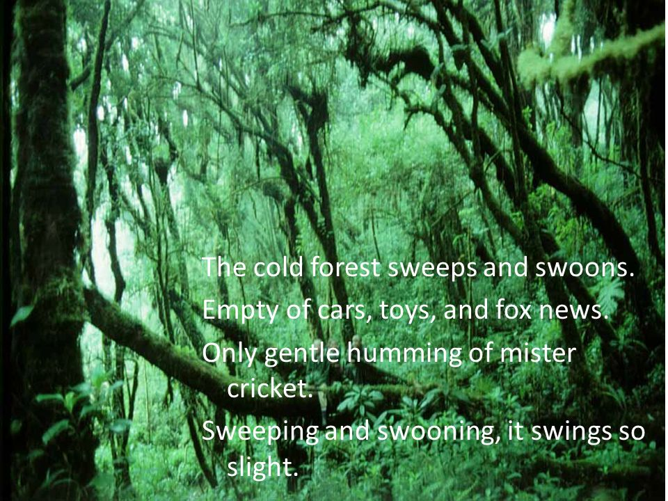 The cold forest sweeps and swoons. Empty of cars, toys, and fox news. Only gentle humming of mister cricket. Sweeping and swooning, it swings so sligh