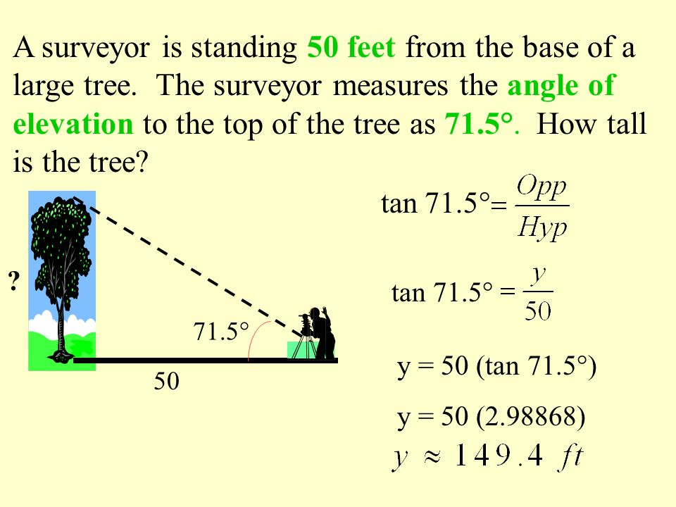 A surveyor is standing 50 feet from the base of a large tree. The surveyor measures the angle of elevation to the top of the tree as 71.5°. How tall i