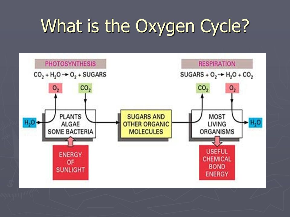 What is the Oxygen Cycle?
