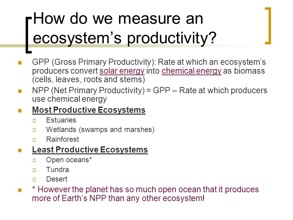 How do we measure an ecosystems productivity.