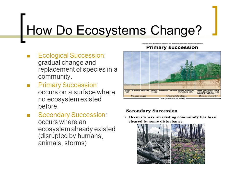 How Do Ecosystems Change.