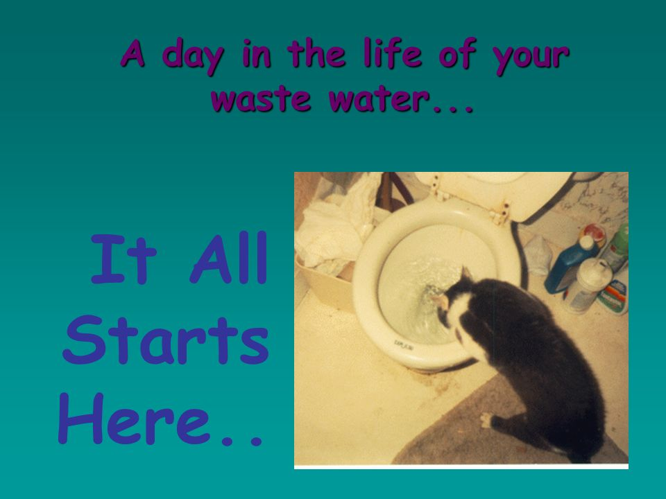 It All Starts Here... A day in the life of your waste water...