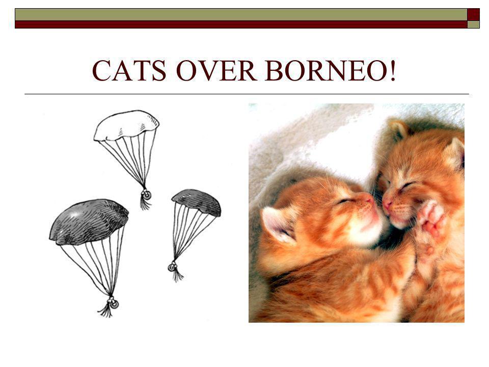 CATS OVER BORNEO!