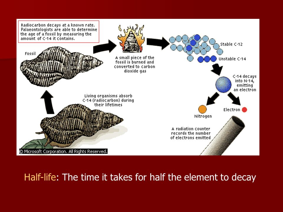 Half-life: The time it takes for half the element to decay