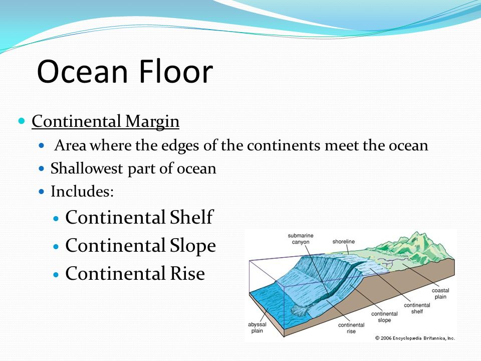 Ocean Floor Continental Margin Area where the edges of the continents meet the ocean Shallowest part of ocean Includes: Continental Shelf Continental