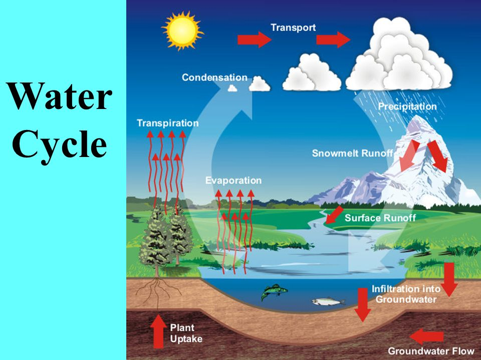 Water Cycle Evaporated from Earths surface Transpired from trees and plants Condensed into water droplets, forms clouds Precipitates back to Earth Runoff into large bodies of water, enters ground The cycle repeats