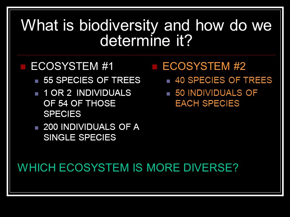 What is biodiversity and how do we determine it? ECOSYSTEM #1 55 SPECIES OF TREES 1 OR 2 INDIVIDUALS OF 54 OF THOSE SPECIES 200 INDIVIDUALS OF A SINGL